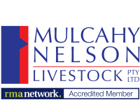 Mulcahy Nelson Livestock